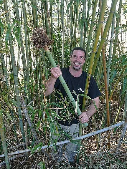 Harvesting Madake in Nara